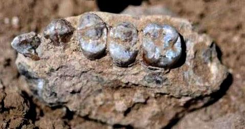 Australopithecus Deyiremeda