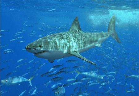 1010+ Gambar Hewan Yang Hidup Di Air Laut Gratis Terbaik