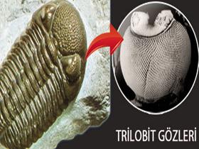Image result for 540 milyon yıl önce yaşamış olan trilobitlerin gözleri, günümüz sinek ve yusufçuklarının gözlerinden farksız müthiş bir yapıya sahip olan PETEK GÖZLERDİR.