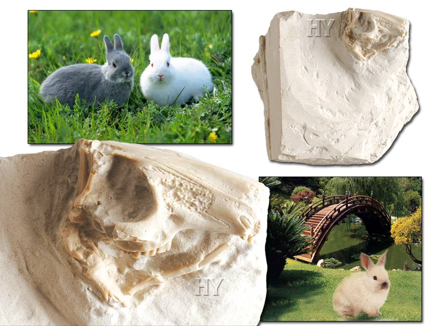 Lapin fossile