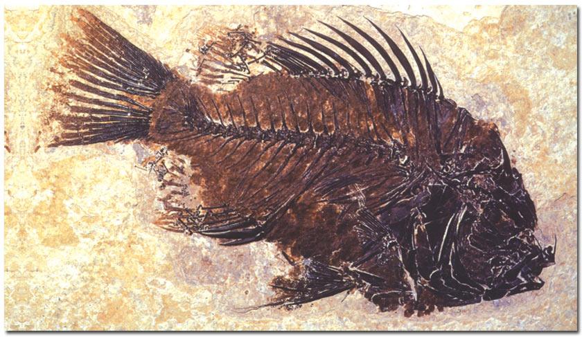 koje su različite metode datiranja fosila