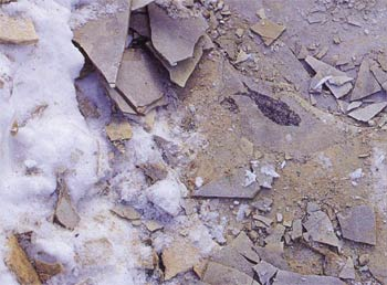 A fish fossil found in Green River, Wyoming