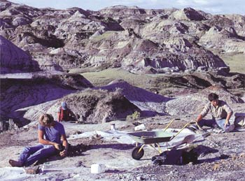 Fossil researches in the Province of Alberta