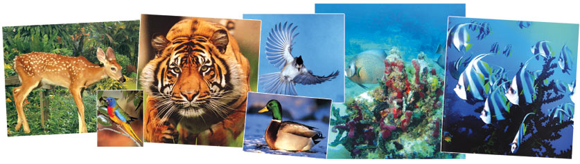 tigers, parrots, gazelles, birds, animals