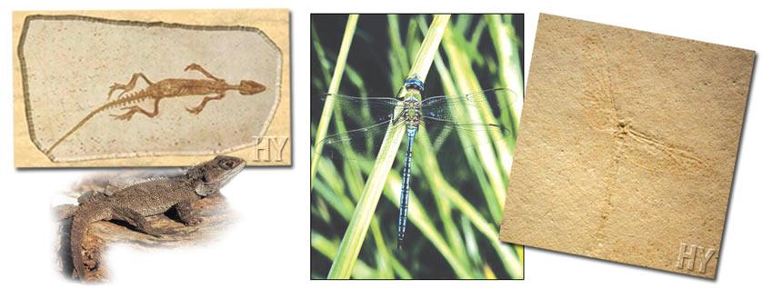 Koje su dvije metode za datiranje fosila