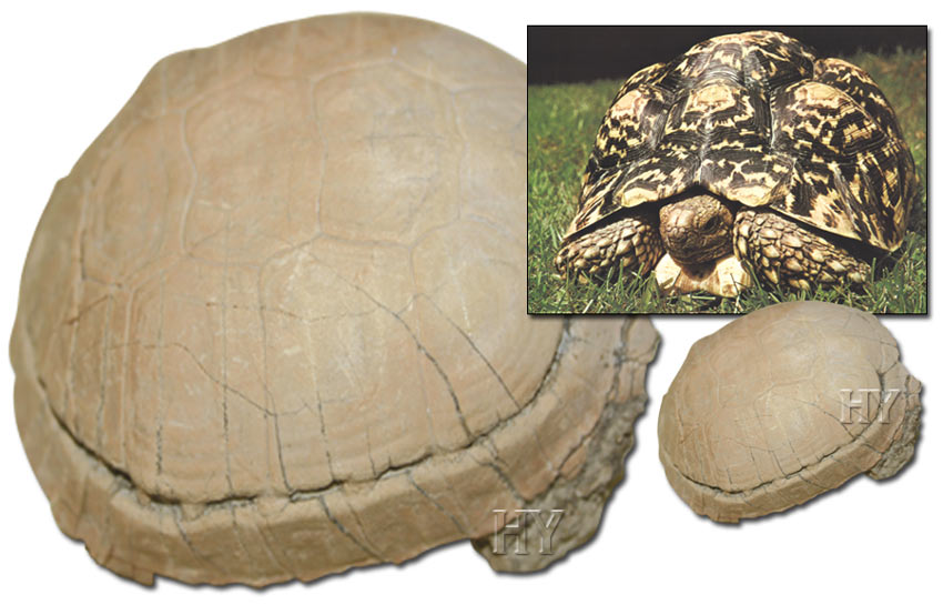 Tortue, fossil, turtle