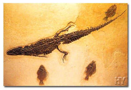 crocodile, fossil, Germany