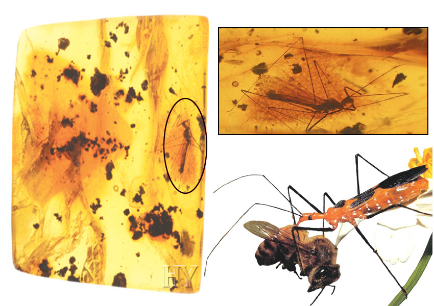 Assassin bugs and fossils