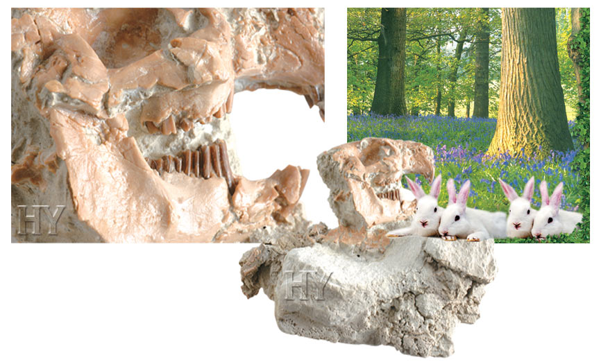 rabbits and fossil