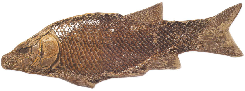 fossil, Triassic Period, fish