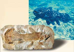 Coelacanths fossil