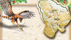 Archaeopteryx drawing and fossil