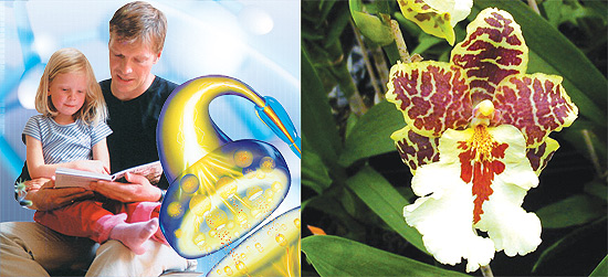 Orchids, enzymes
