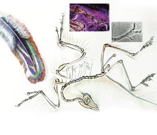 Archæopteryx