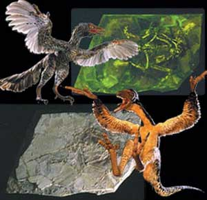 dino-kuş sahtekralığı