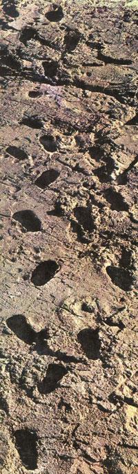 3.6 milyon yıllık insan ayak izi