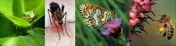 metamorfoz yapan canlılar