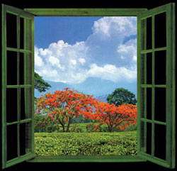 window, color garden
