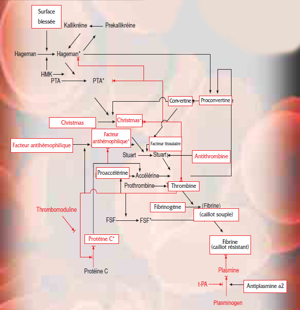 coagulation_system