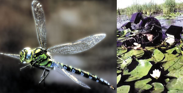 Nature photographer Gilles Martin dragonflies observation.