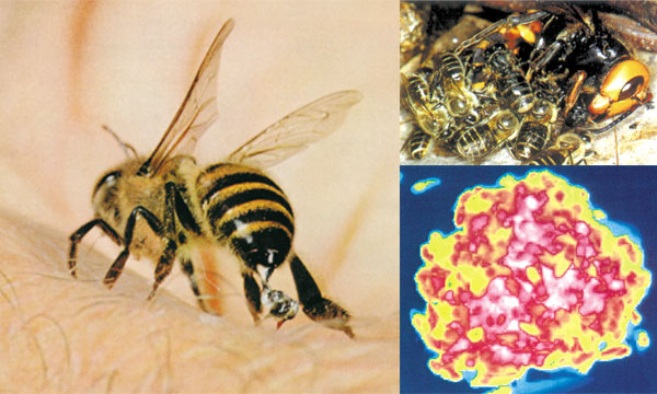 defense of honey bees