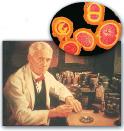 Staphylococcus, Alexander Fleming