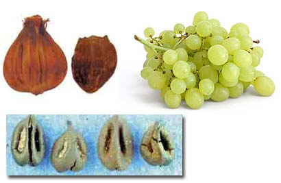 nipa palm, grape seed
