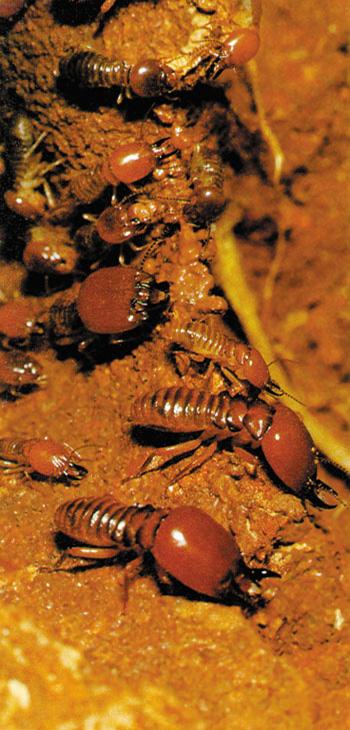 Read or download Das Wunder der Termiten