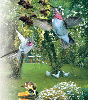 Neden kuşları sarı yaprakları çevirirler: soruna neden olan nedenler ve yollar