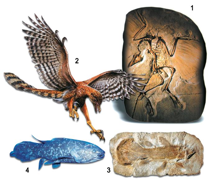 fossil record, evolution, fossil